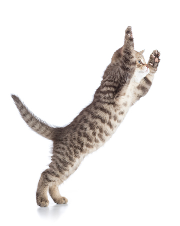 Flying or jumping cat kitten isolated on white Stock Photo