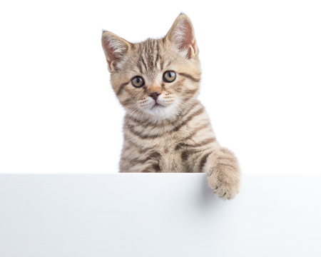 Il gatto gattino si trova su un poster vuoto, aggiungi il messaggio.