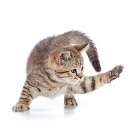 cat kitten clawing at the air while looking for some food