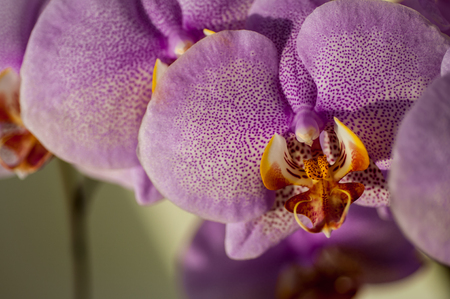 Flower orchid color fuchsia close-up Stock Photo