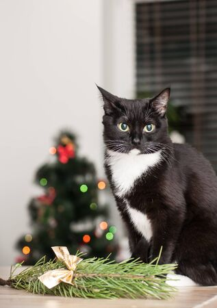 cat on the background of a christmas tree decorated with a close up stock photo
