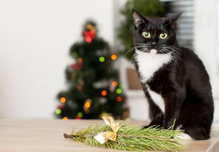 cat on the background of a christmas tree decorated with a close up stock photo - Black Cat Christmas Tree Decoration