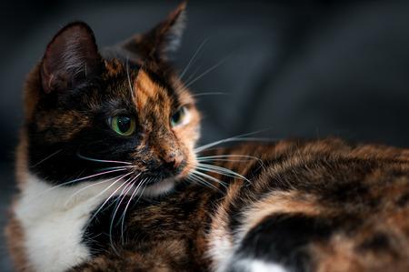 ritratto di gatto a casa da vicino