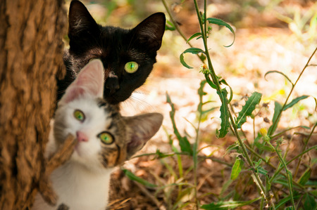 two cats look out from behind a tree close up