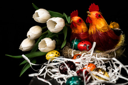 Easter eggs, two hens in a nest with bright plumage and white tulips on a dark background
