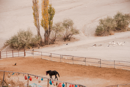 Horse dark color in a fenced enclosure and geese in the open air Banque d'images - 122497823