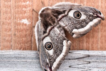 Brown  butterfly sits on a wooden board close-up