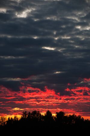 Beautiful dark blue-red sunset with clouds on the sky with horizon on trees