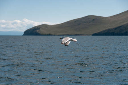 Gray seagull on the background of blue lake Baikal in summer afternoon