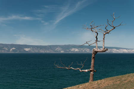 Dry tree with branches on the high shore of Lake Baikal overlooking the opposite rocky shore and clear sky in summer 版權商用圖片