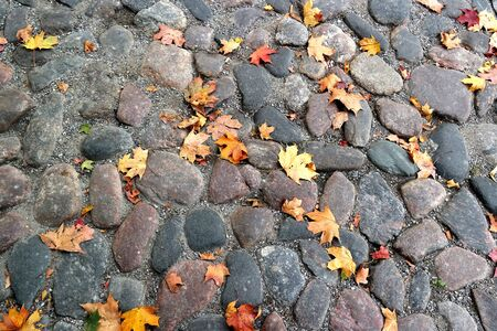 cobblestones: cobblestones. a few yellow leaves. autumn day. Stock Photo