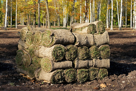 turf pile: Spiral of fresh rolled grass turf, Spiral  stacked on pallets