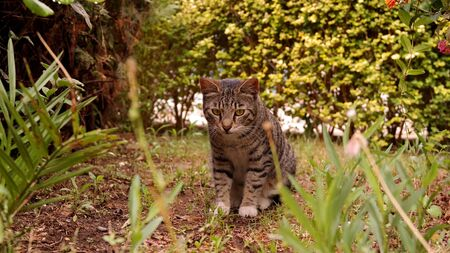 curiously: cat sitting in the grass and looking curiously Stock Photo