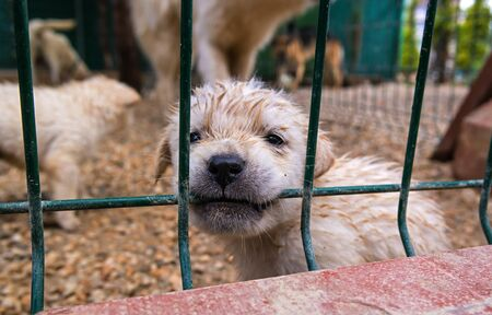Puppy in a cage. Puppy chewing on a metal grate. In the background is seen the other dogs. Stock Photo
