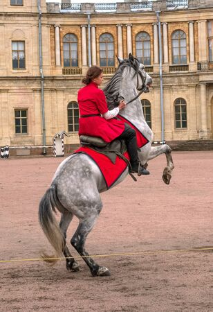 Gatchina, St. Petersburg, Russia - September 30, 2017: Horse show of Cossacks on the parade ground of the Gatchina Palace. The Cossack girl forced the horse to stand on its hind legs. Editöryel