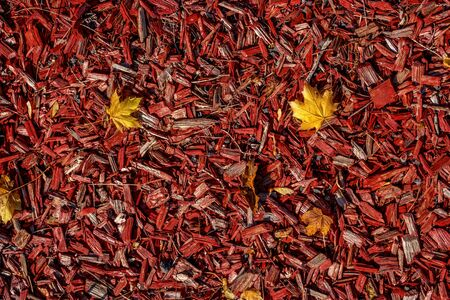 Decorative wood chips with autumn leaves. The slivers are red, the leaves are yellow.