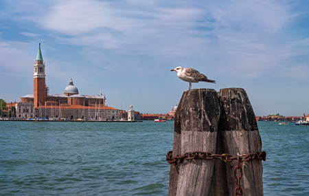 Seagull sits on a mooring column. In the background, the Church of San Giorgio di Maggiore. Venice, Italy. Mooring poles are entangled with a chain. Sunny day