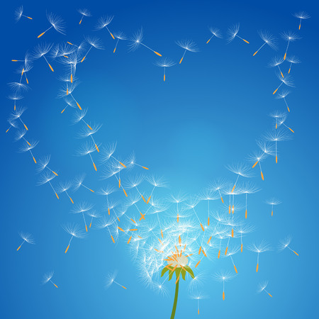 macro flowers: Vector flower dandelion on a wind loses the integrity forming love