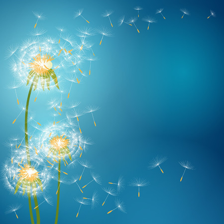 Dandelion flower with seeds flying away with the wind - vector spring background