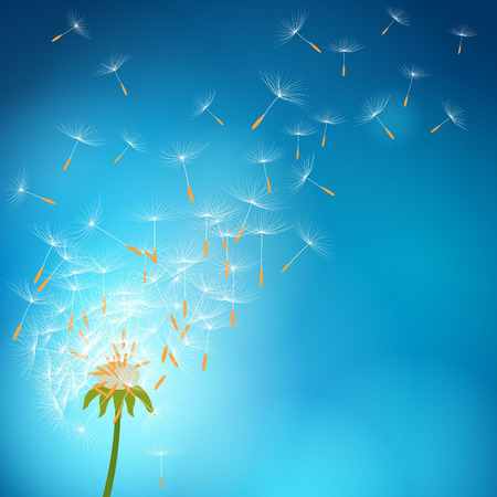 overblown: Overblown dandelion with seeds flying away with the wind - vector