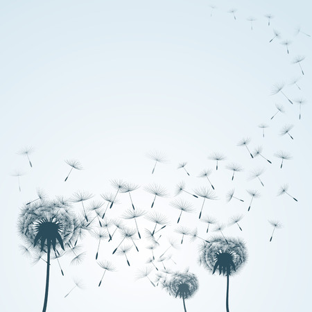 floral background flying dandelion silhouette