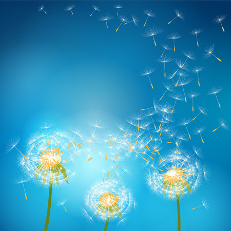 dandelion flower: Dandelion flower with seeds flying away with the wind - vector nature background