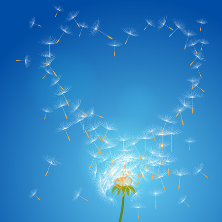 Overblown dandelion with seeds flying away with the wind forming love frame