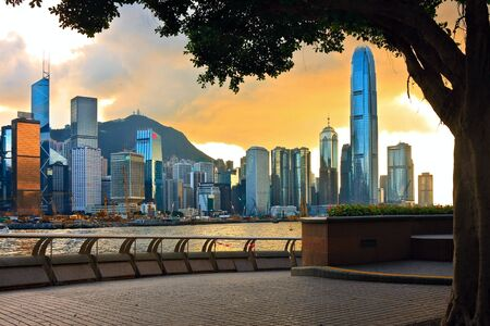 seafronts: Hong Kong sunset skyline with tree silhouette in the front