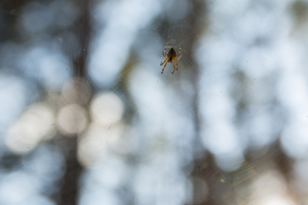 Insect Spider on Cobweb