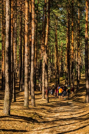 Young People Among the Pines