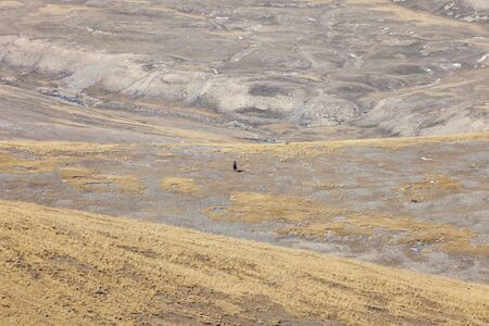 A lone rider on a horse in the mountain steppe. A man on a horse against the background of autumn wild meadows in the mountains of Asia.