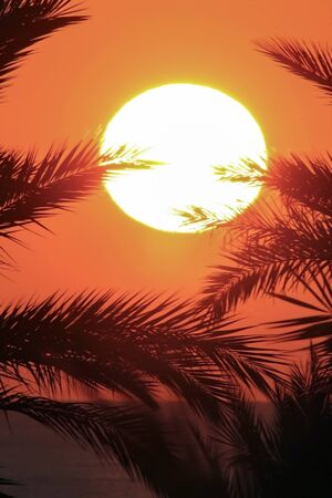 Sunrise in palm leaves. The red sea.  The yellow disk of the sun over the sea framed by branches of palm trees 스톡 콘텐츠