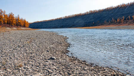 Stony Bank of the Siberian taiga river in autumn. River floodplain in the larch forest in September in the North of the Krasnoyarsk territory.