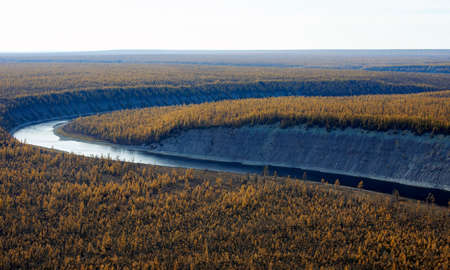 Helicopter view of the turn of the Siberian river flowing among the autumn larch taiga. Evening over the Northern forest.