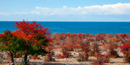 Autumn landscape with a view of lake Issyk-Kul from the South Bank. Red leaves of trees on the Bank of a natural reservoir against the background of mountains, clouds and blue sky. 版權商用圖片