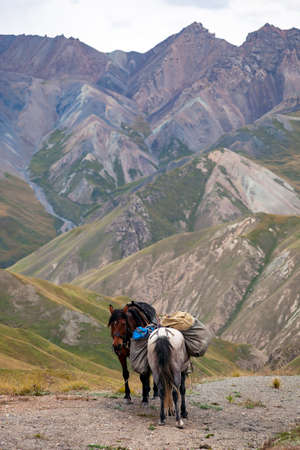Horses with packs rest on a pass in the mountains. Two horses with loads are standing on a ridge against the backdrop of high mountains. 스톡 콘텐츠 - 153372315
