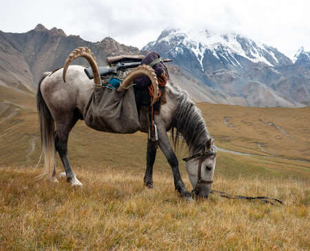 Horse under the saddle with the trophy of ibex and weapons in the mountains. The return from the hunt. Light horse with a load, resting after crossing the pass. 스톡 콘텐츠 - 153689335