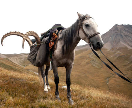 Horse with a trophy of ibex after hunting in the Tien Shan mountains, Kyrgyzstan, Asia