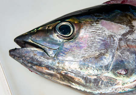 Head and eye of a tuna freshly caught close-up. Tuna head pressed by hand to the cutting table. Head of large yellowfin tuna holds a hand on a cutting table after sea fishing. 스톡 콘텐츠