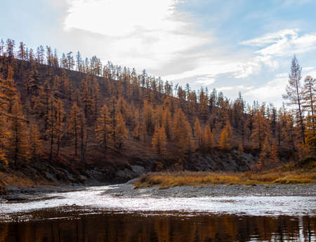 Landscape on the Siberian river with background of cloudy sky and the shore with larch autumn taiga. Coastal slope of side tributary with rare larches in September.