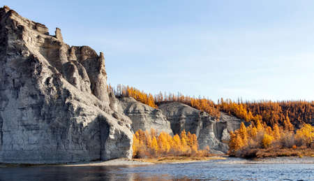 Shore of the wild Siberian taiga river on a clear autumn day. Larch orange September taiga on the banks of the northern river.