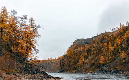 Cloudy foggy autumn morning on the taiga northern river. Siberian fast river with larch taiga on steep banks in September.