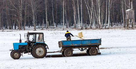 Huntsman on a tractor with a trailer throws out top dressing for wild animals in winter. Laying out grain feed for wild ungulates on the feeding ground in the January snowfall. 스톡 콘텐츠