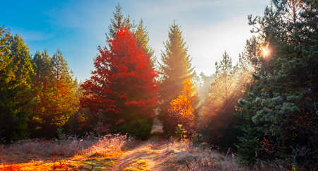 Rays of the autumn morning sun break through the fog and dew on the forest road. The September sun illuminates the forest vegetation along the road among the trees. 스톡 콘텐츠