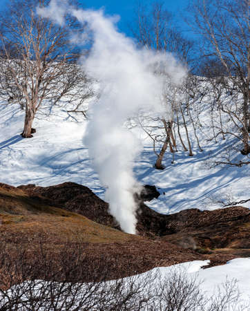 Geyser spewed column of gas and steam into the Valley of the Geysers. A hot fountain of steam, gas and water, as an example of volcanic activity against the background of snow in spring in Kamchatka.