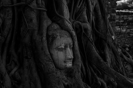 Buddha of Ayutthaya photo