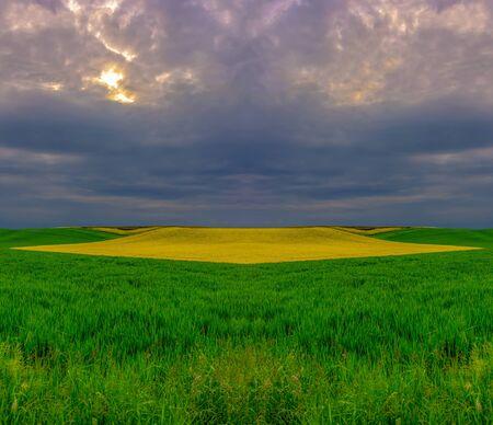 Surrealistische Frühlingslandschaft mit grüngelben Feldern vor Sonnenuntergang Standard-Bild