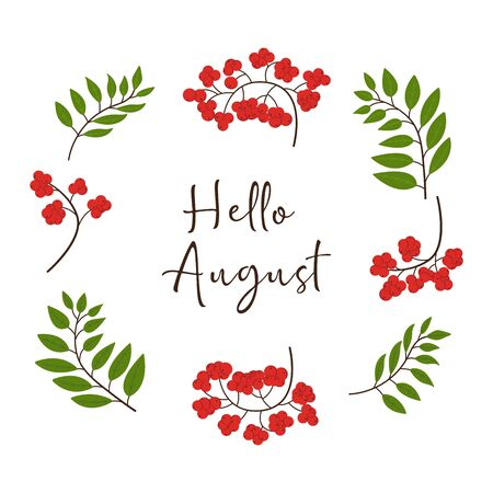 Hello August background with rowan branches. Vector illustration