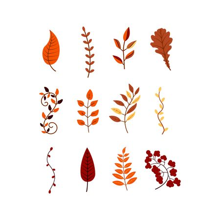 Autumn leaves and branches of different trees colorful illustration. Set september or october leaf fall