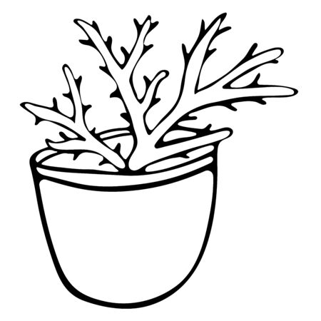 Scarlet flower in pot doodle style black and white. Hand drawn illustration. Useful plant for the creation of cosmetics and medical applications. Aloe vera